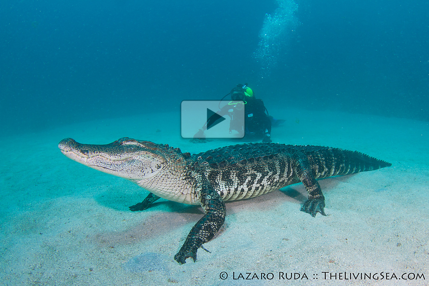 Audi West Palm Beach >> Crazy DIVING WITH A HUGE NILE CROCODILE - DID HE SURVIVED ...