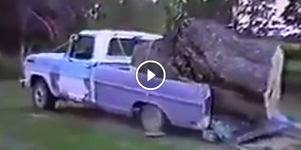 CARTOON TRICK FAILS IN REAL LIFE: Man Fails To Saw A Tree Into A Pickup Truck! - NO Car NO Fun ...