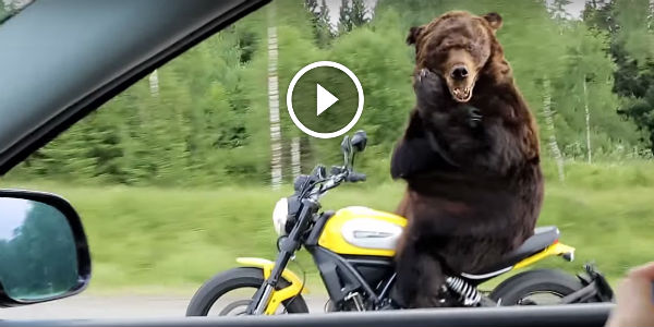 This Is Just Brutally Funny Can You Imagine A Bear