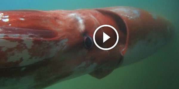 Check Out This Exclusive Cnn Footage Of A Giant Squid