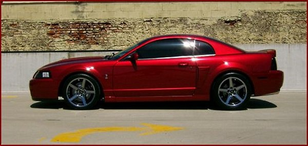 2003 Ford Mustang Svt Cobra Side View No Car No Fun Muscle Cars